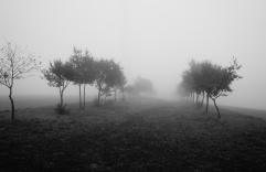 passage-2016-a-2017-brouillard-2