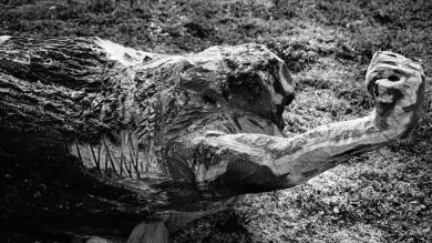 pierre-daragon-processus-sculpture-en-bois-1