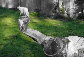 pierre-daragon-processus-sculpture-en-bois-5