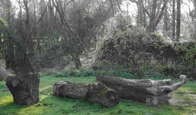 pierre-daragon-processus-sculpture-en-bois-6